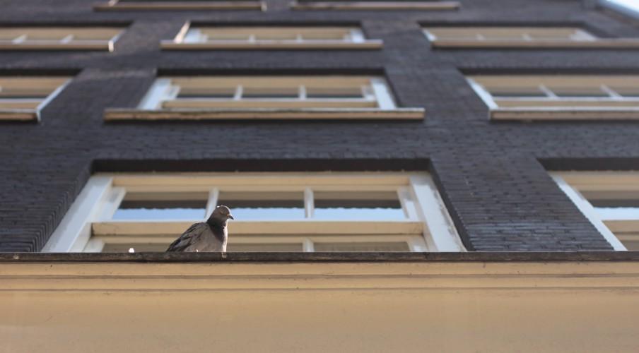 amsterdam_2012_08_11_4627